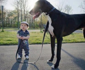 The Top 10 Tallest Breeds of Dogs You Can Have as a Pet