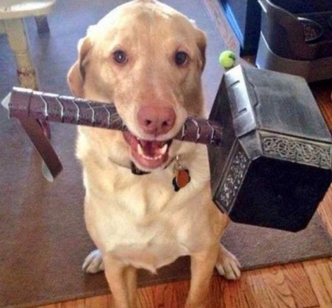 Ten Amazing Thor Hammer Gift Ideas That Will End Ragnarök