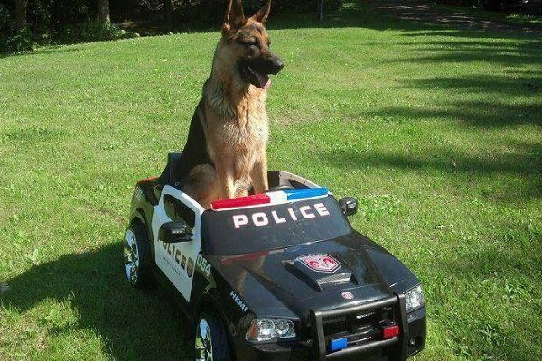 Ten Dogs Dressed as Police Who Didn't Make It Onto the Force