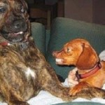 Ten Dogs Who Have Strange Friends They Don't Really Like