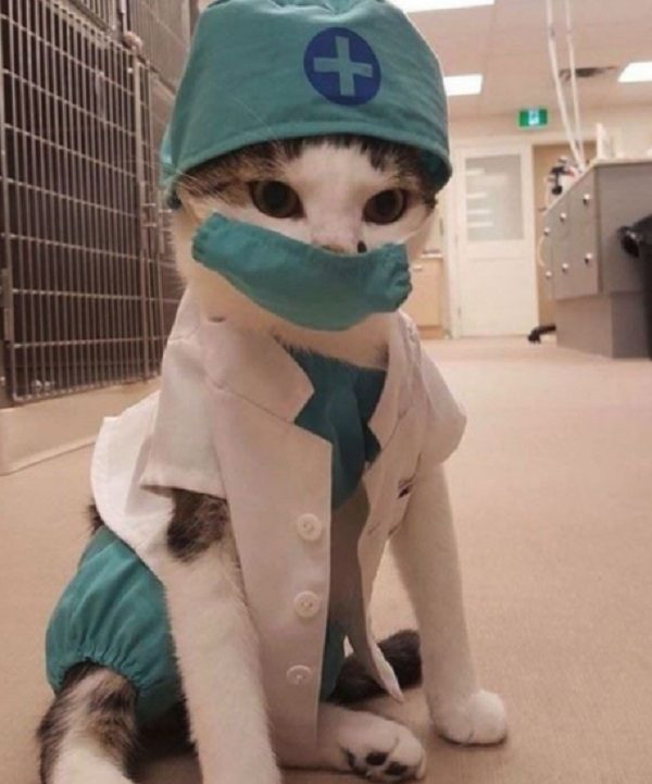 Cat Role-Playing as a Nurse