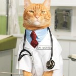 Ten Role-Playing Cats Who Love Playing Doctors and Nurses
