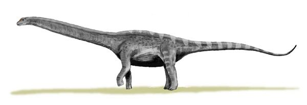Argentinosaurus from the Titanosauridae Family