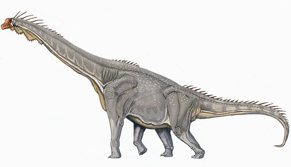Brachiosaurus from the Brachiosauridae Family