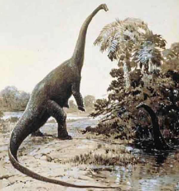 Barosaurus from the Diplodocidae Family