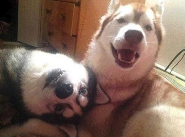Dogs With Strange Friend