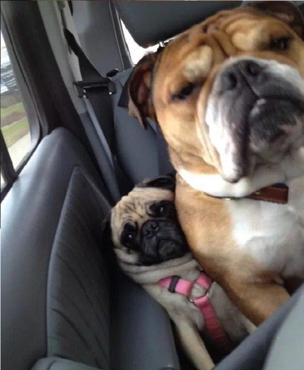 Dog With Strange Friend