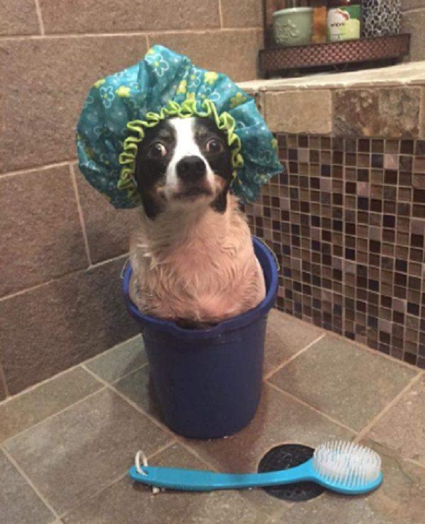 Dog enjoying its bath