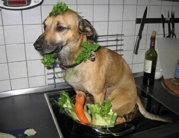 Dog Inside a Pan of Vegetables
