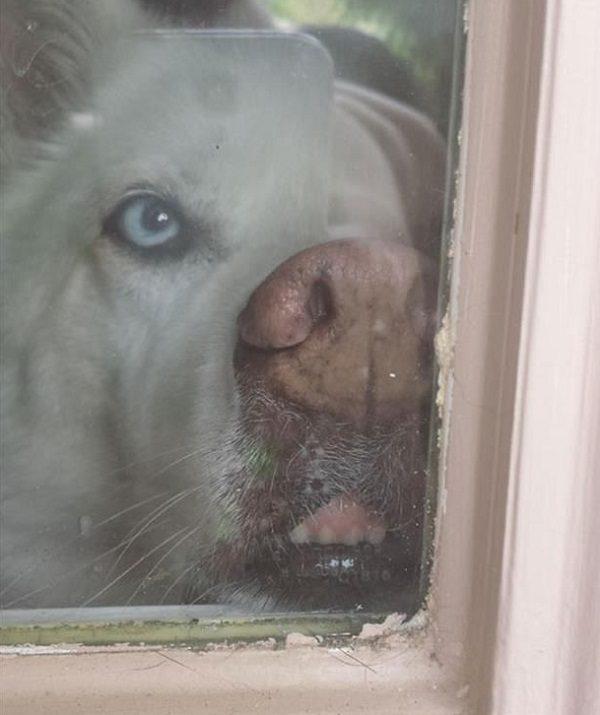 Dog in Window