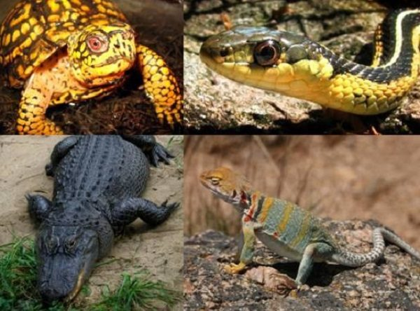 Are Reptiles the Most Abundant Type of Animal on Earth?