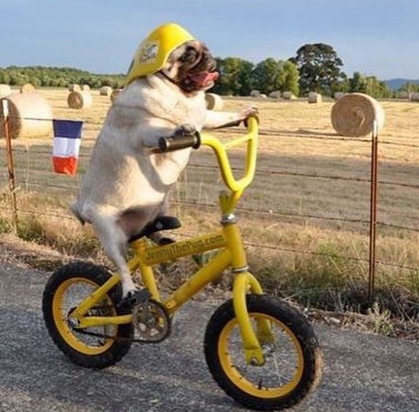 Dog Riding a Bike