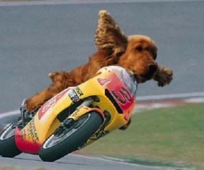 Ten Dogs Riding Bikes That Will Turn the Saddest of Faces Upside Down