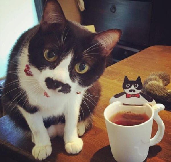 Cat Next to Cat Cup