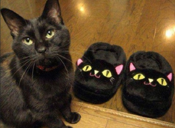 Cat Next to Cat Slippers