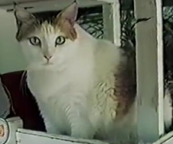 Creme Puff, The World's Oldest Cat