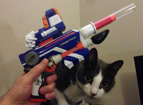 Cat with Nerf Gun