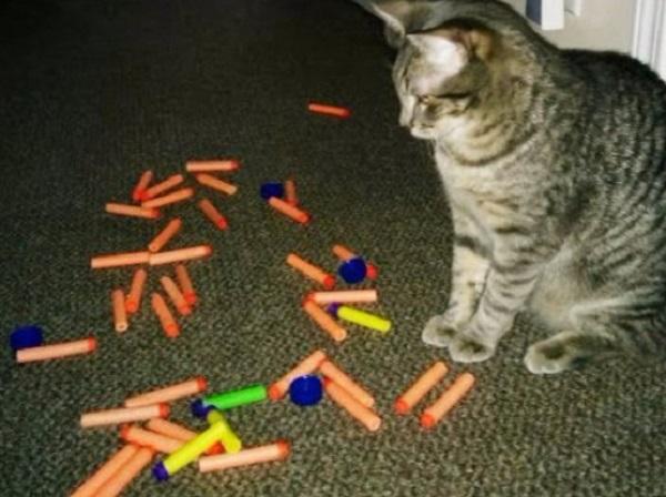 Cat with Nerf Gun Darts