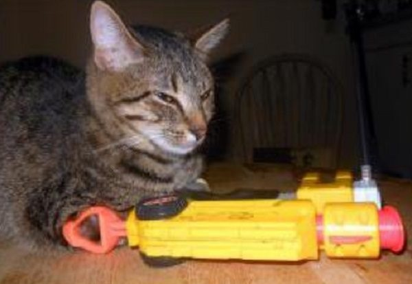 Ten Sure-Shot Nerf Cats Who Know the Game Is on!