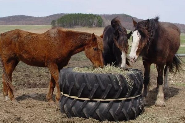 Horse Feeder Made From an Old Tractor Tyre