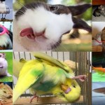 The Top 10 Most Popular Pets in the UK 2018
