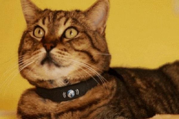 PetTracer GPS Cat Collar