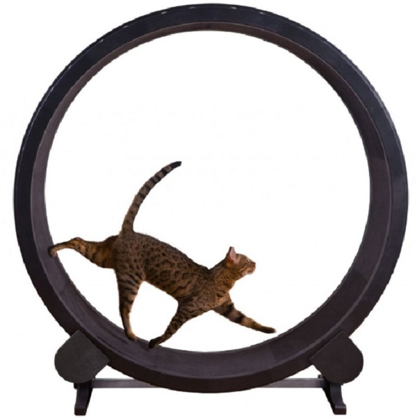 Cat Tread Mill