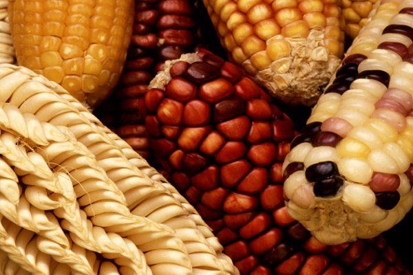 Preservation of genetic diversity