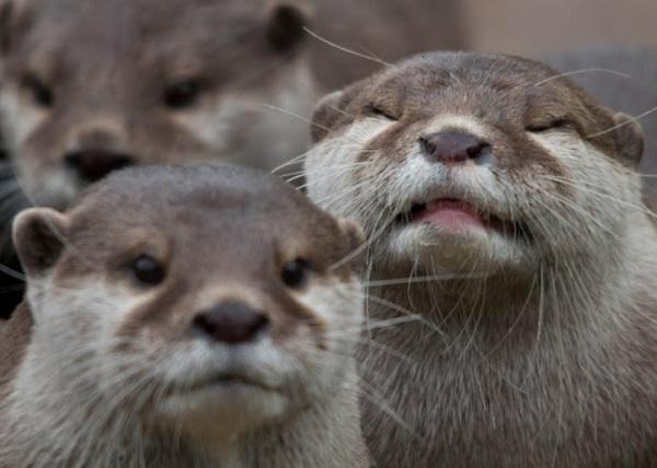 Otter Photobomb