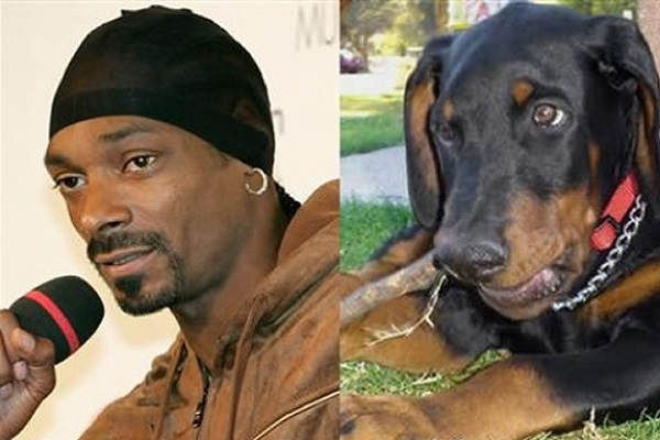 Snoop Dogg Looks Like a Doberman Pinscher