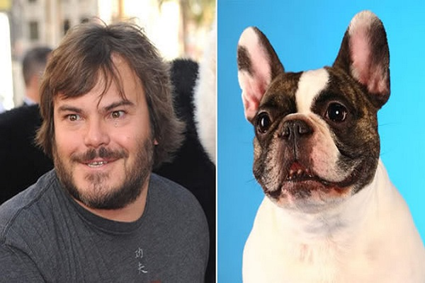 Jack Black Looks Like a French Bulldog