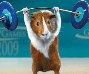 Ten Guinea Pigs Doing Human Things and Helping Out