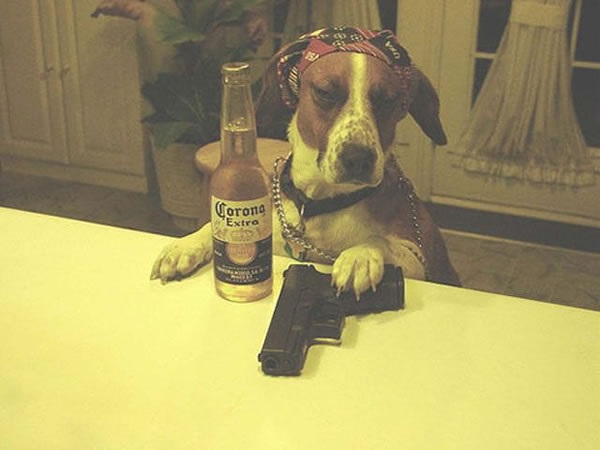 Gangster Dog
