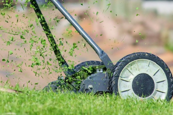Mow down your Grass but not too early