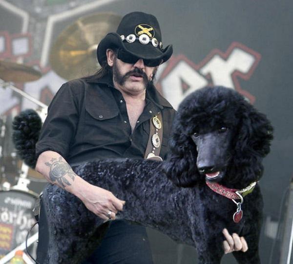 Lemmy Playing Dog Bass
