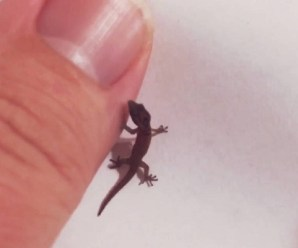 Ten of the Worlds Most Amazing and Unusual Lizards