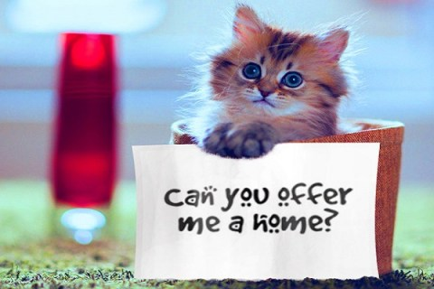 Top 10 Steps You Should Take When Rehoming Your Pet