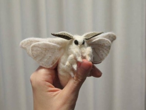 Venezuelan Poodle Moth - Bombyx mori