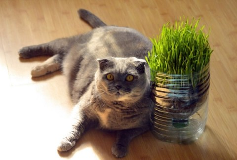 10 Tips to Keep Your Indoor Cat Happy and Healthy
