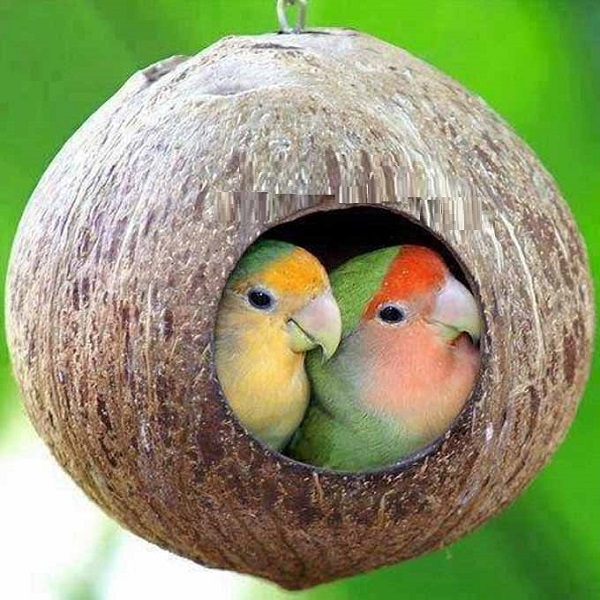 A Birdhouse Made From a Coconut Shell