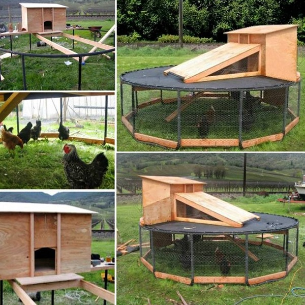 A Chicken Coop Made From a Trampoline