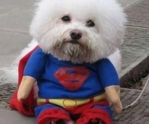 Ten Real Animals With Superpowers You Won't Find in a Comic