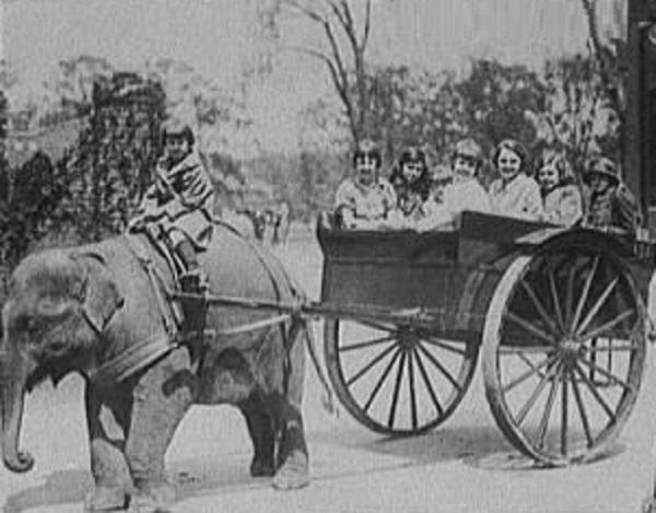 Elephant Pulling a Cart