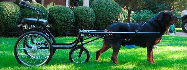 Dog Pulling a Cart