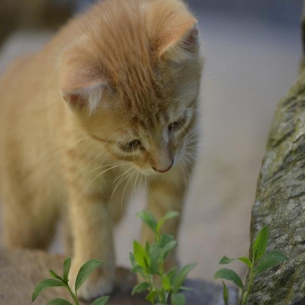 Heightened Curiosity