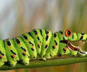 Ten of the Worlds Rarest Species of Caterpillars and Where to Find Them