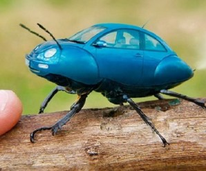Ten of the Worlds Rarest Species of Beetles and Where to Find Them