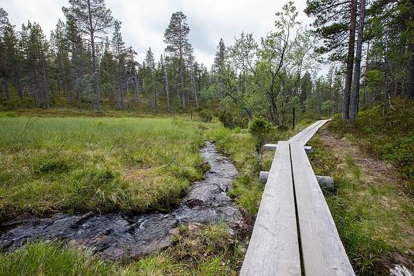 Reasons to Visit Lapland in 2020 - Trekking