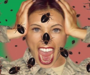 The 10 Most Creepy House and Garden Pests and How to Get Rid Of Them