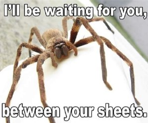 10 Reasons Why You Should Be Afraid of Spiders